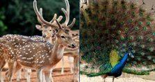 হরিণ-ময়ূর বিক্রি করবে জাতীয় চিড়িয়াখানা