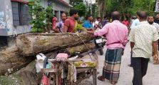 বন কর্মকর্তার গাছ পাচার, আটক করলেন উপজেলা চেয়ারম্যান